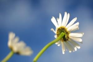 blur-flower-lawn-4204-827x550