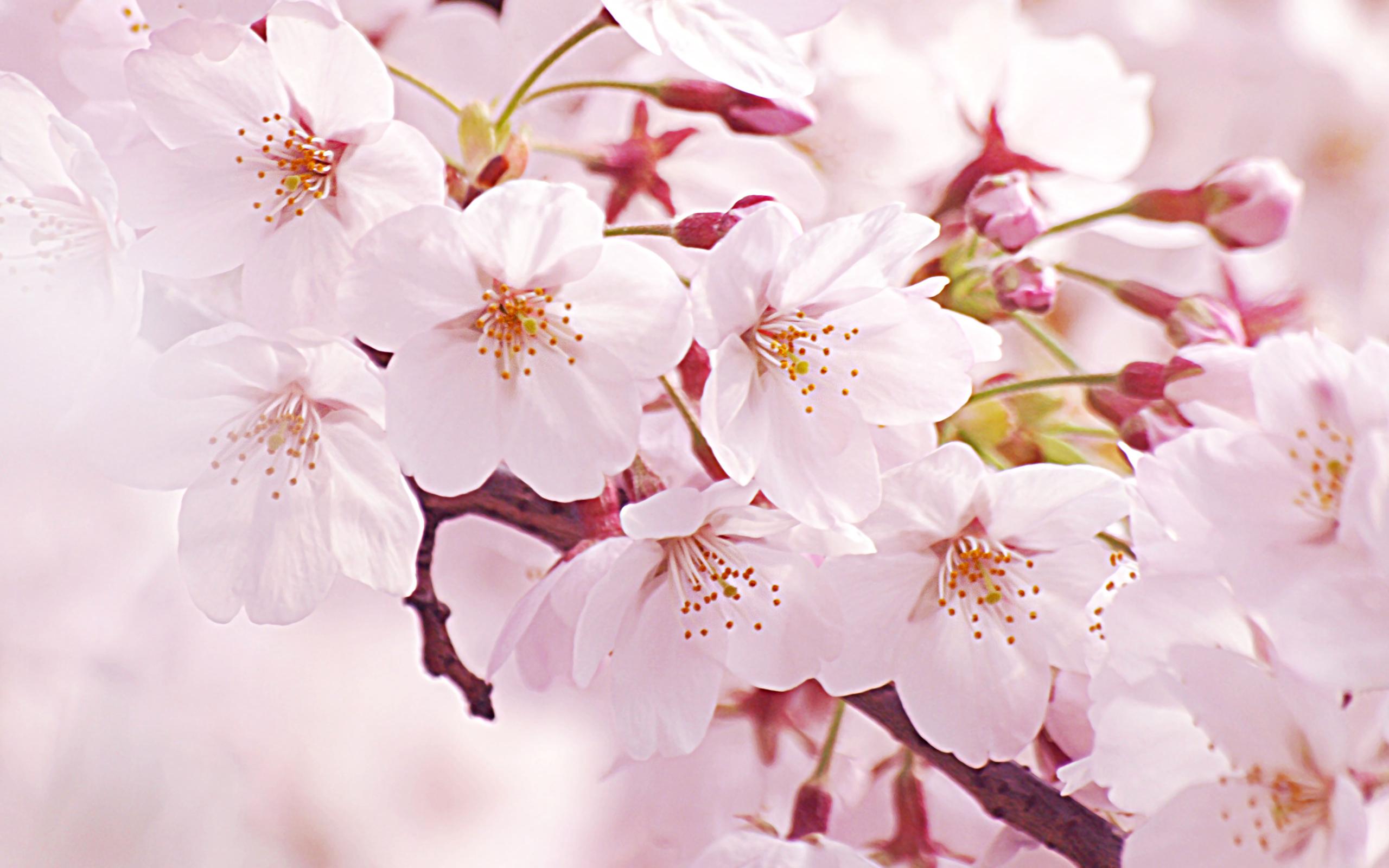 2015年4月(平成27年) 桜のシーズン!全国各大学・入学式日程一覧等まとめ